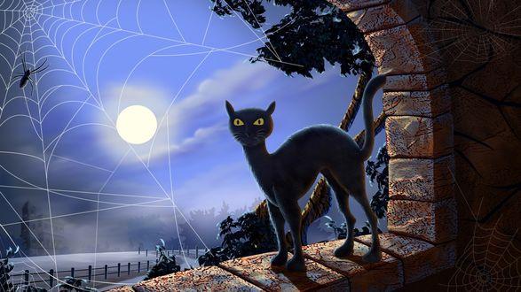 Обои Черный кот в лунном свете
