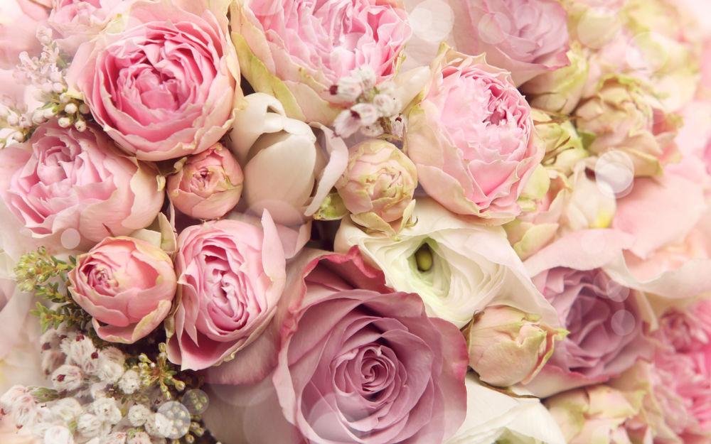 Обои цветы пионы для рабочего стола