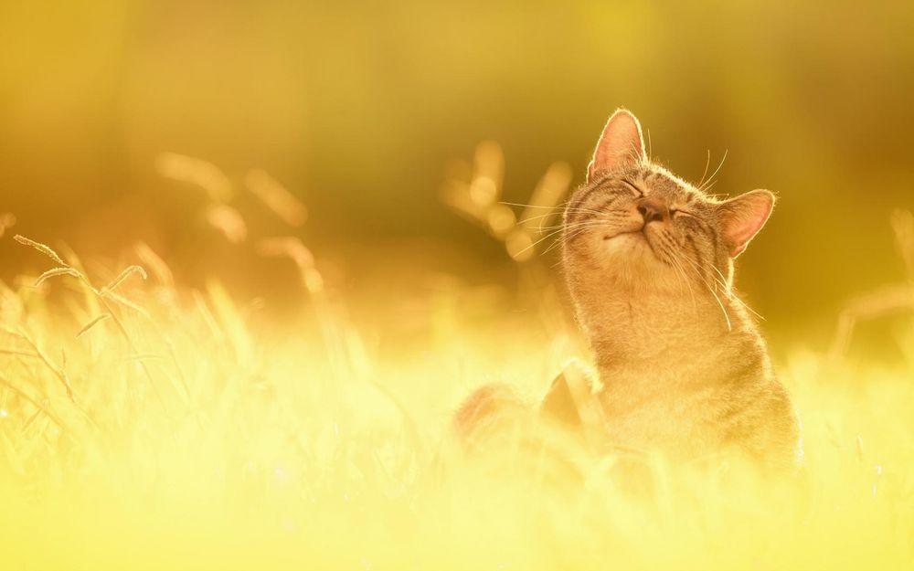 Картинка кота на солнышке