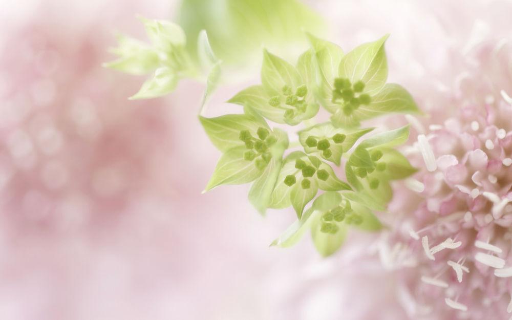 Обои нежные цветы