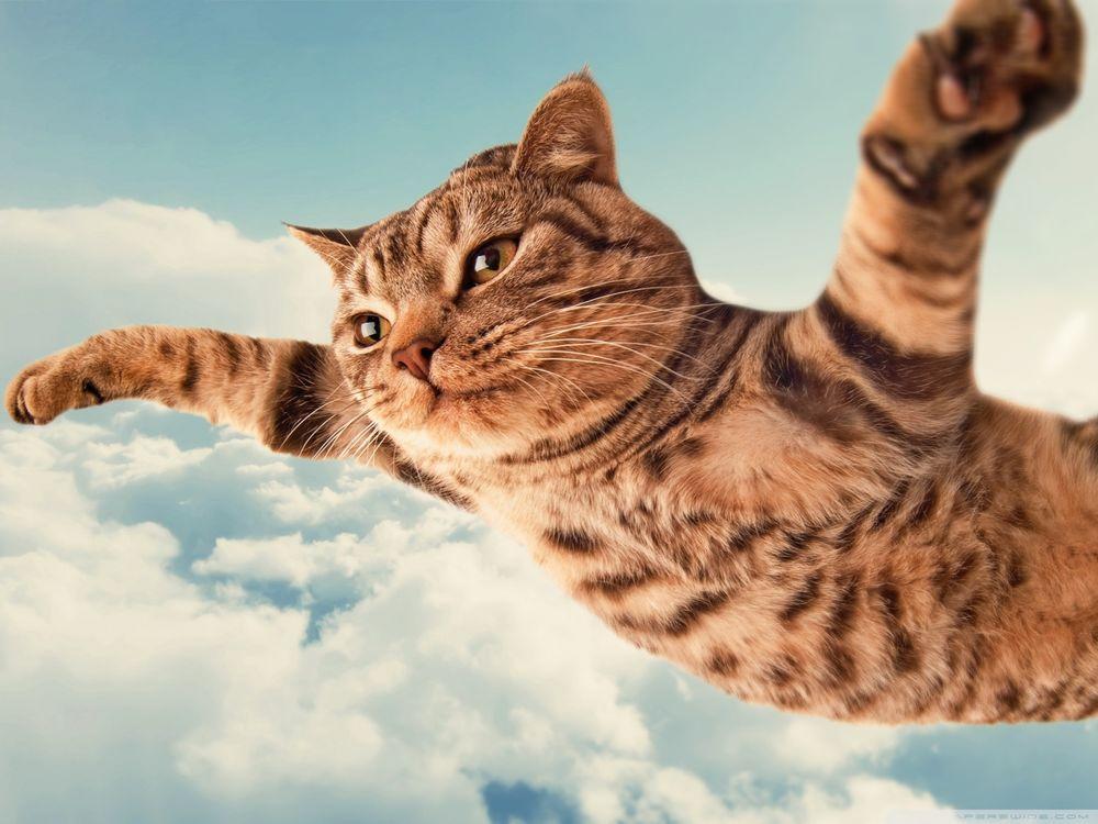 Коты летят в небе