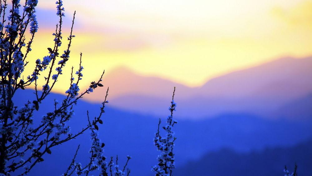 Обои для рабочего стола Цветущие ветви дерева на фоне гор на рассвете