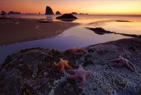 Обои Красивые разноцветные морские звезды, лежащие на каменистом морском побережье на фоне золотистого солнечного заката, фотография Михаила Мищугина
