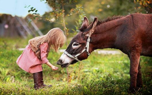 Обои Белокурая девочка, одетая в меховую жилетку подает ослику, склонившему голову к руке девочки, зеленый листик с травинкой, фотография Ирины Сапроновой / Irina Sapronova