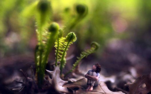 Обои Мальчик сидит на сухом дубовом листке, смотря на растущий весенний папоротник