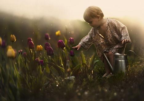 Обои Белоголовый ребенок в длинной ночной рубашке, слегка согнув в коленях босые ноги, пытается дотронуться рукой до разноцветных тюльпанов в капельках утренней росы, растущих на клумбе в саду, рядом стоит металлическая лейка для полива, фотография Elena Shumilova