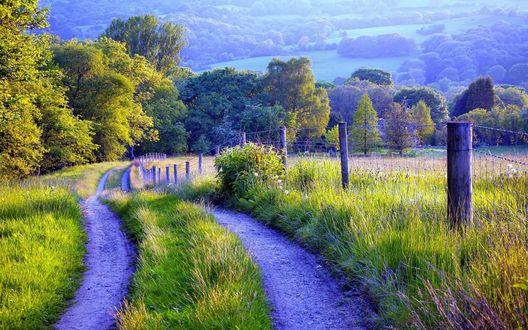 Обои Грунтовая дорога в поле сочной зеленой травы