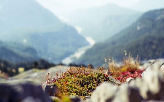 Обои Бурундук сидит в горных цветах