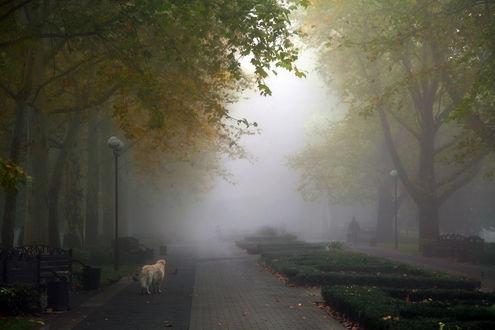 Обои Бездомный пес, одиноко бродящий по аллее парка, усыпанной желтыми, осенними листьями, проходящих мимо людей, туманной мглы, опустившейся над аллеями и деревьями, автор Ritta