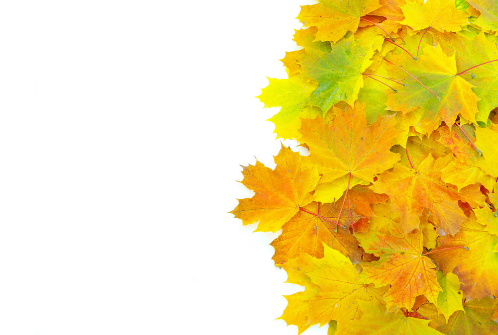 обои на рабочий стол кленовые листья осенью 14826