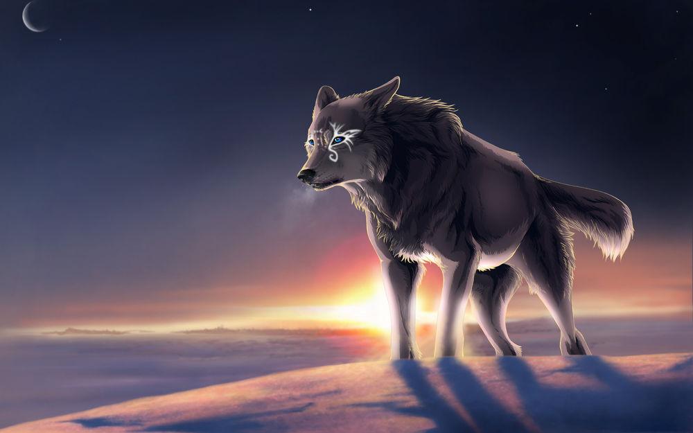 Мая, картинки одинокий волк на рабочий стол
