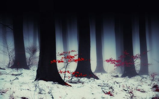 Обои Небольшие кустарники с красными листьями у черных стволов деревьев в зимнем лесу, фотограф Janeksedlap