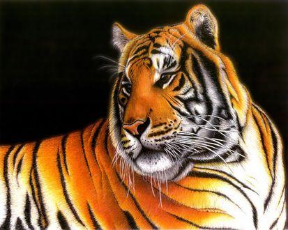 Обои Рисунок тигра на черном фоне