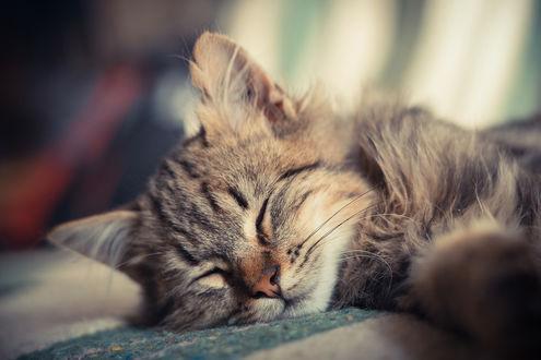 Обои Спящий полосатый котенок