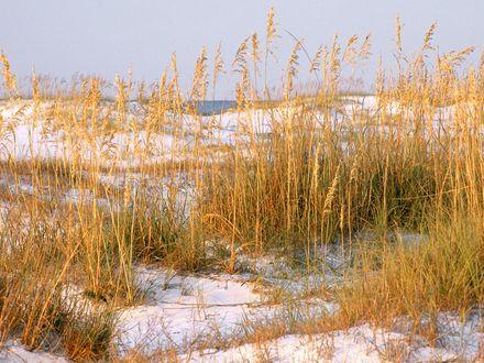 Обои Заснеженный берег с сухой травой на фоне слабо виднеющегося моря и голубого неба