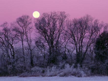 Обои Полная луна видна из за веток деревьев покрытых инеем