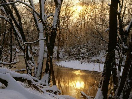 Обои Река с отражением в ней солонца проглядывающего сквозь ветки деревьев покрытых инеем