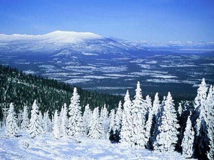 Обои Ели покрытые снегом на вершине заснеженных гор