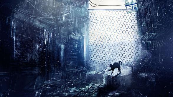 Обои Черная кошка потягивается в переулке рядом с забором