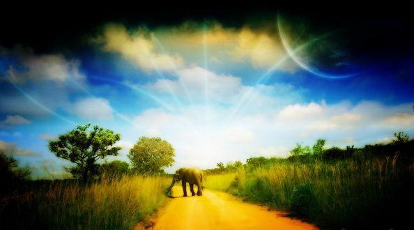 Обои Слон, идущий по песчаной дорожке, проходящей среди высокой, зеленой травы и деревьев на фоне полуденного неба с разноцветными тучами, появившейся планетой