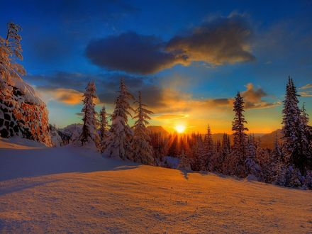 Обои Заснеженные ели на фоне заходящего солнца