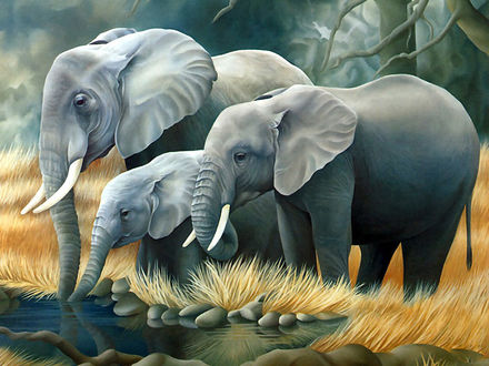 Обои Слоны на водопое