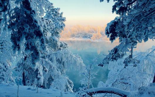 Обои Восходящее утреннее солнце на небе с туманной мглой, осветило верхушки деревьев, покрытых инеем, золотистыми лучами и незамерзающее озеро, от водной поверхности которого поднимается легкий пар