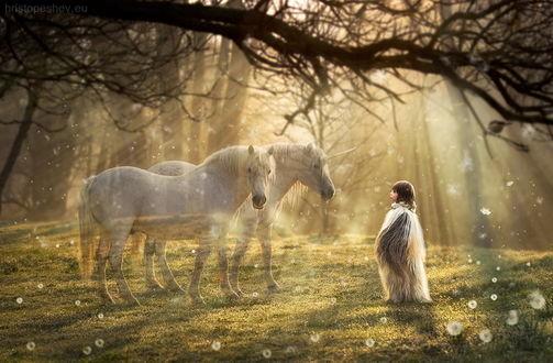 Обои Девочка, одетая в овечью шкуру, стоящая на зеленой поляне в окружении одуванчиков, смотрит на двух белых единорогов, стоящих перед ней