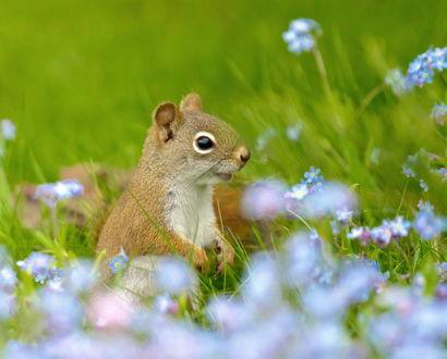 Обои Белка сидит в траве среди цветов