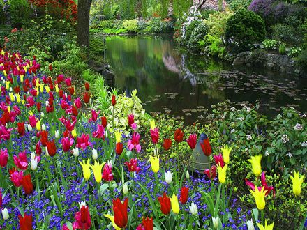 Обои Берег реки обросший разноцветными тюльпанами