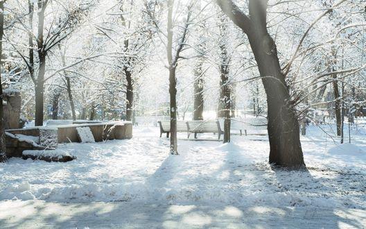 Обои Зимний парк с пустыми скамейками, залитый ярким солнечным светом