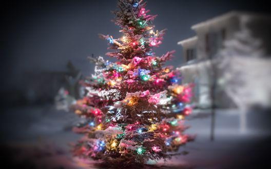 Обои Украшенная гирляндой елка в снегу, на фоне вечернего города