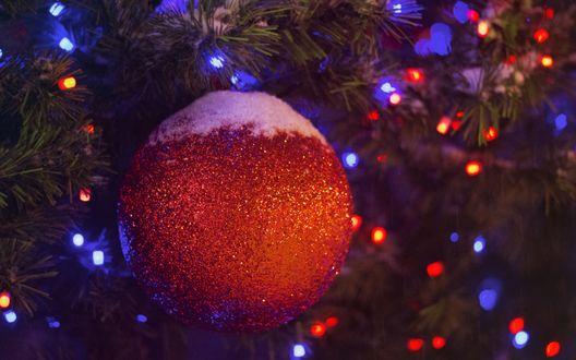 Обои Красный шар, покрытый снегом, вистит на елке среди огоньков гирлянлянды