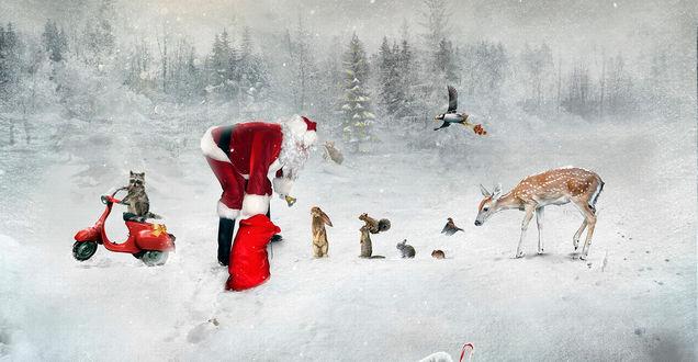 Обои Дед Мороз в лесу раздает зверюшкам подарки