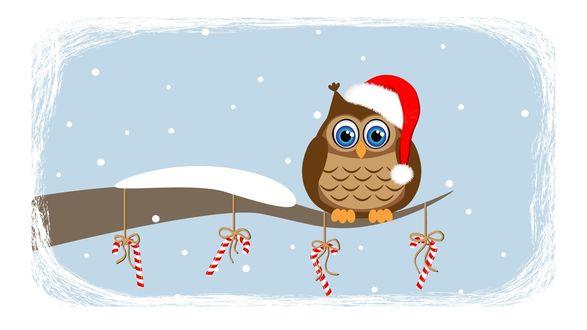Обои Сова в шапке Деда Мороза сидит на ветке дерева