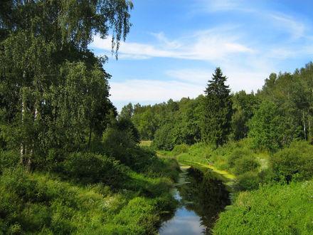 Обои Красивый лес на фоне голубого неба