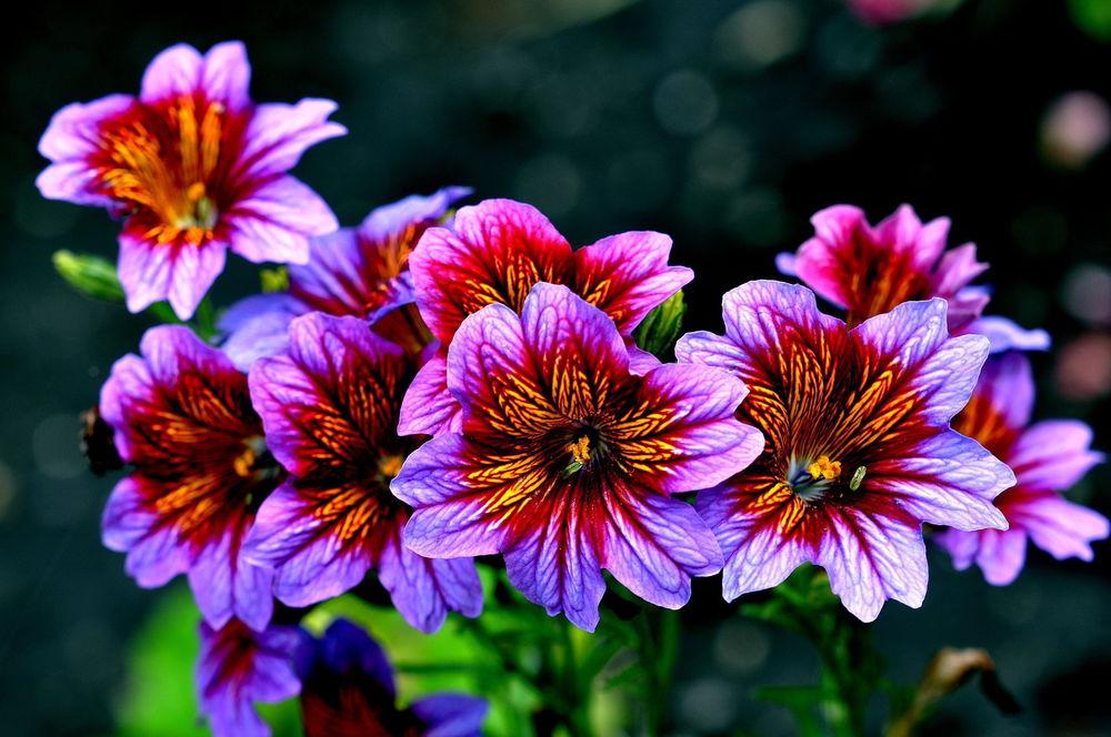 Обои для рабочего стола лето природа цветы широкоформатные