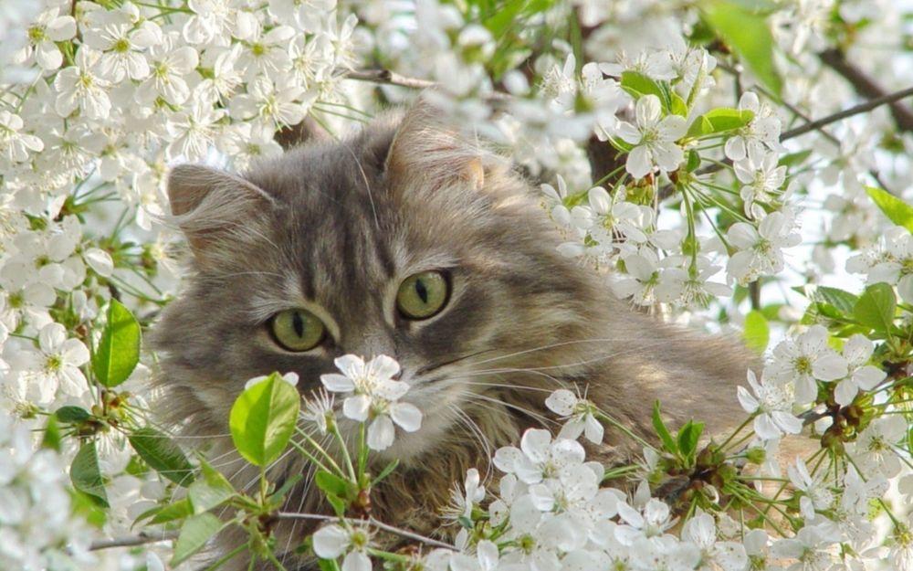 Коты весна картинка