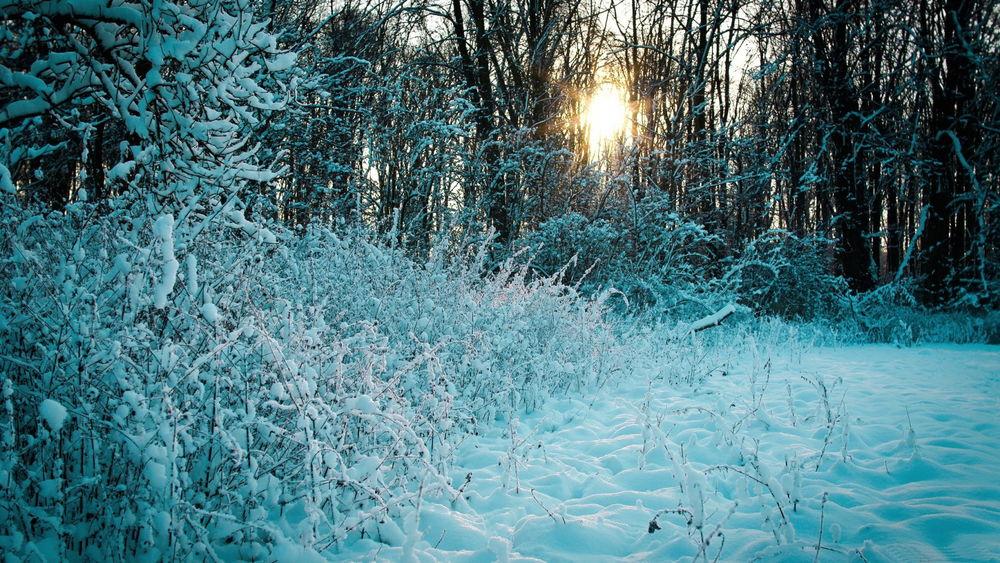 Обои для рабочего стола Заходящее солнце на вечернем небосклоне осветило своими лучами опушку леса с растущим кустарником, покрытым густым слоем снега с лазурным отливом