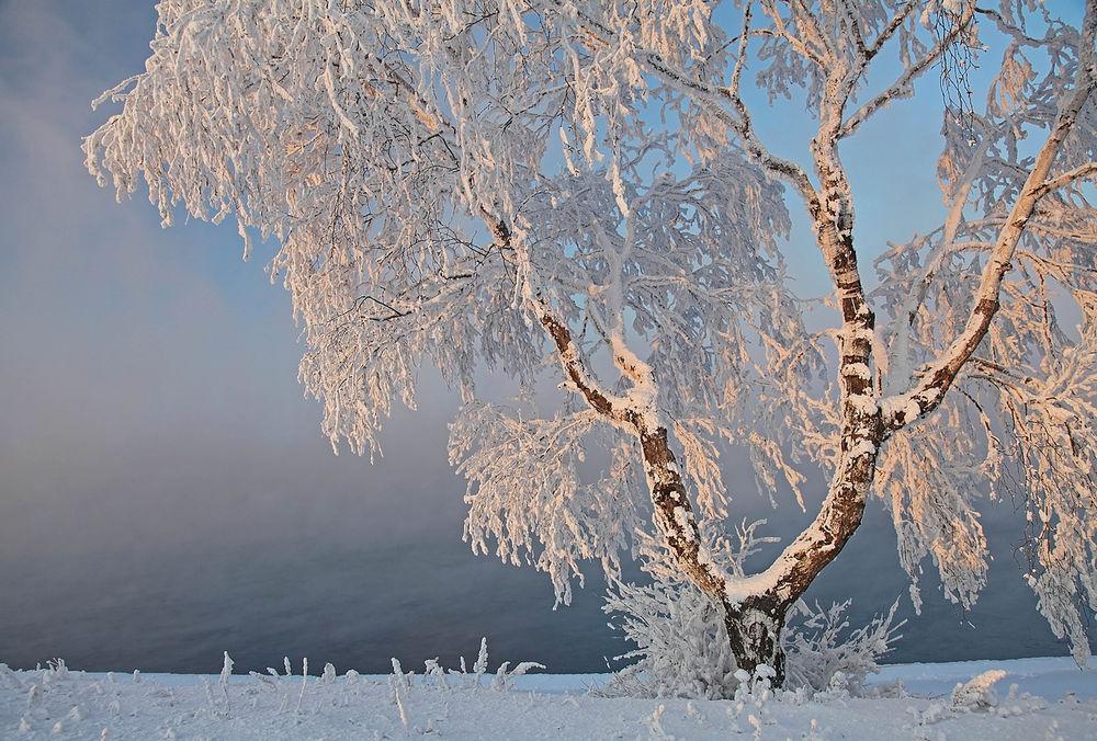 Картинки по запросу картинки зимней берёзы в инее