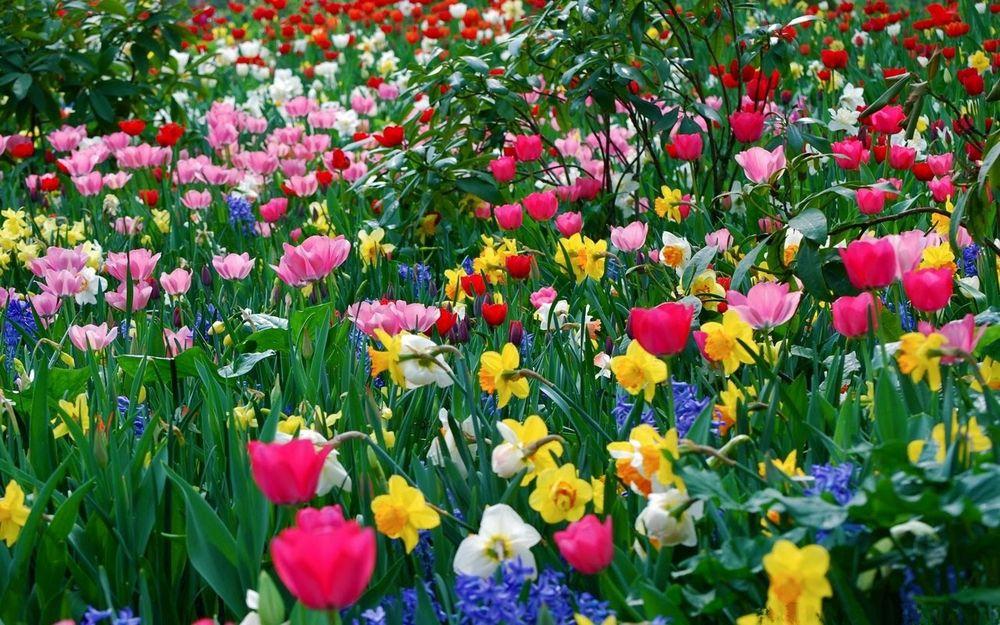 Фото на рабочий стол поляна с цветами