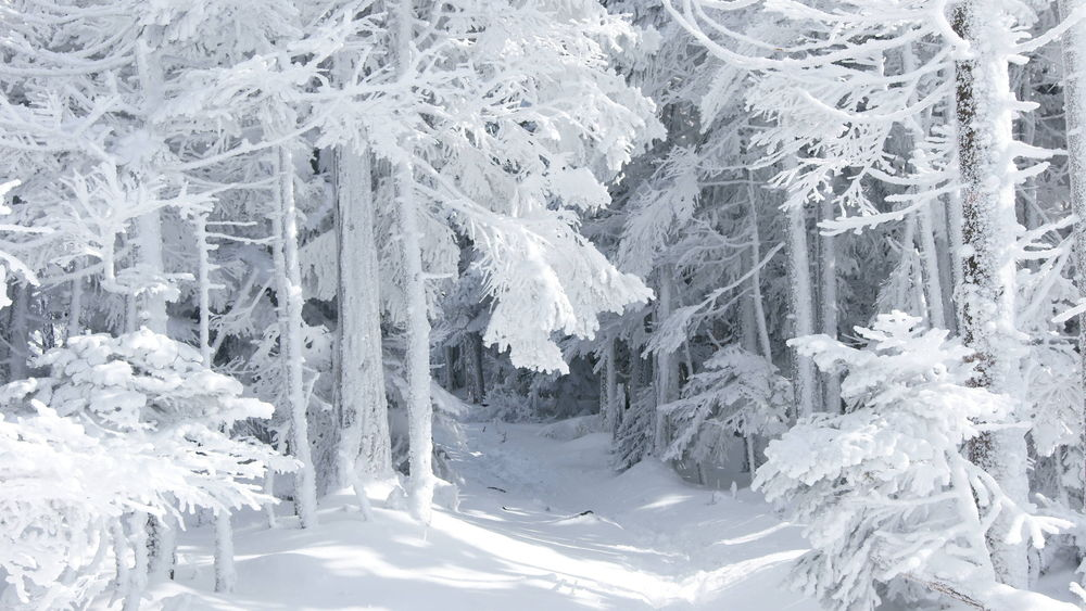 Красивые Обои На Рабочий Стол Зимний Лес