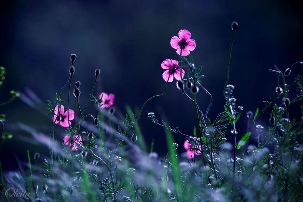 Цветы мелкие