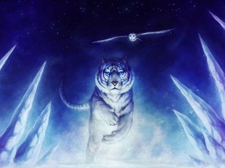 Обои Белый тигр и полярная сова