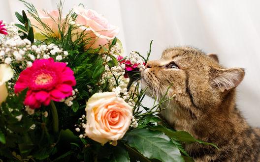 Обои Кот нюхает букет с розами