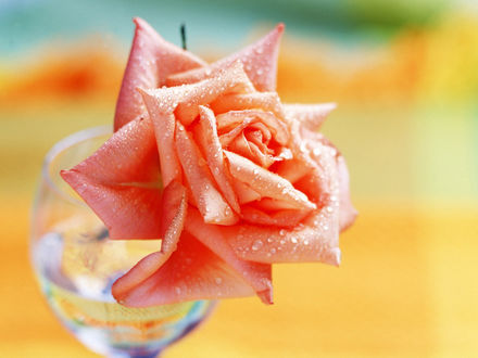 Обои Роза в стакане