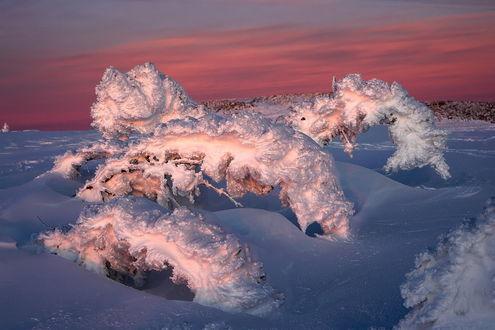 Обои Причудливые формы деревьев, согнувшихся под толстым слоем снега на фоне красивого заката