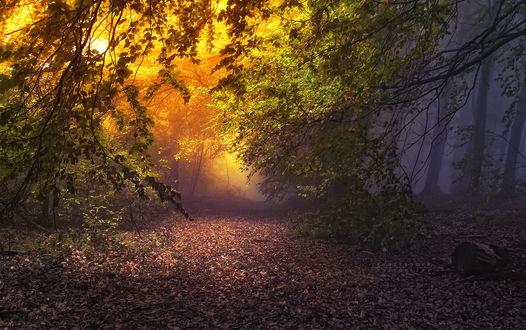 Обои Грунтовая дорога в туманном лесу, усыпанная опавшей листвой, фотограф Янек Седлар / Janek Sedlar
