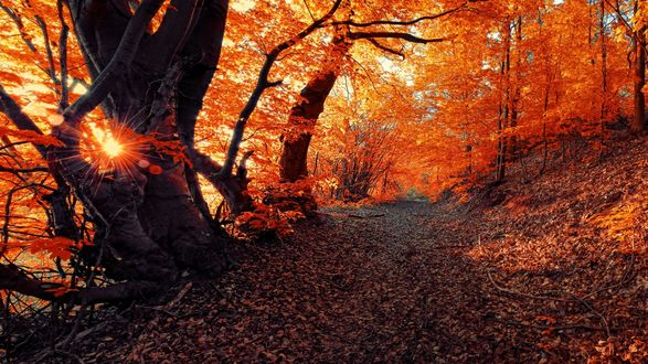 Обои Грунтовая дорога в осеннем лесу, усыпанная сухой опавшей листвой, фотограф Янек Седлар / Janek Sedlar