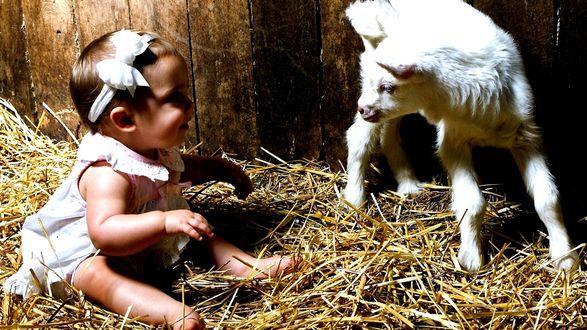 Обои Ребенок сидит на соломе рядом с белым козленком